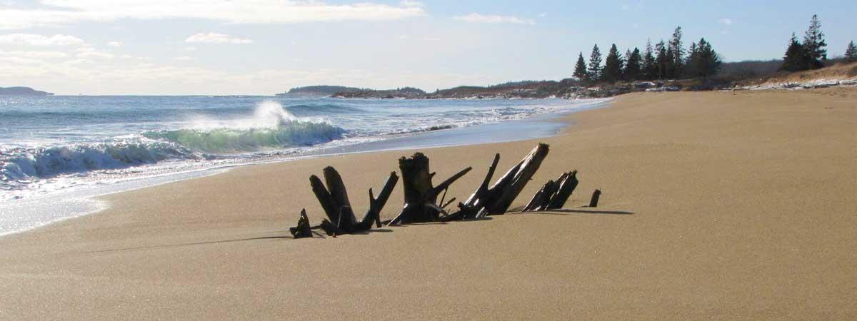 slide-maine-beach-driftwood
