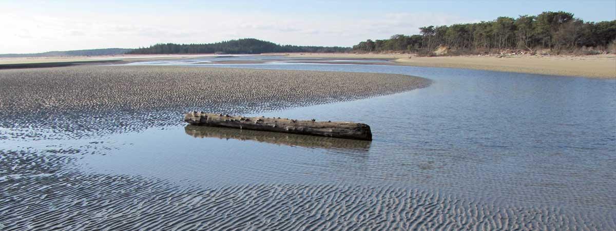 slide-low-tide-driftwood